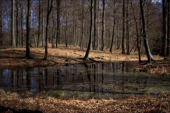 skog-3.jpg