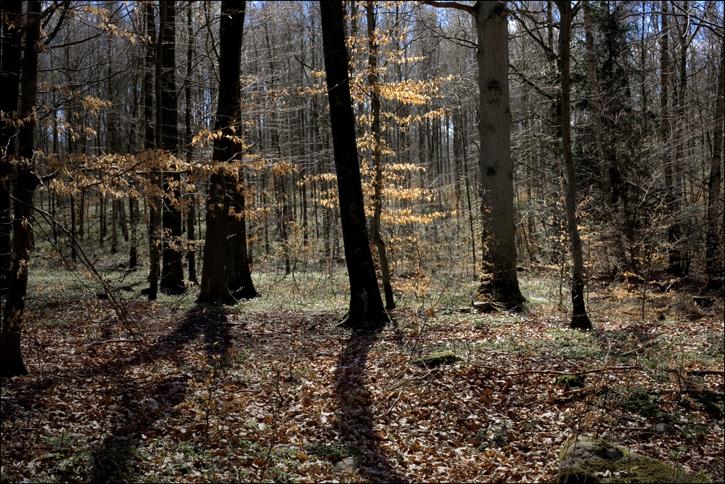 skog1.jpg