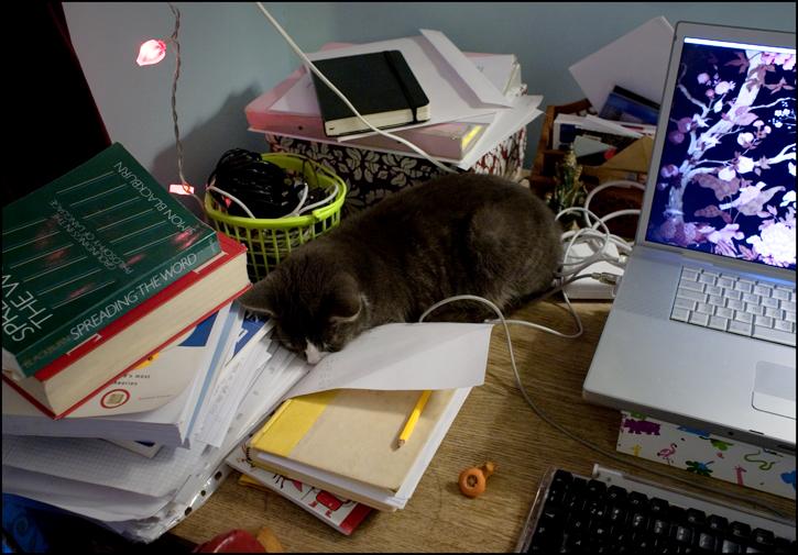 alla-katter-vill-ligga-dar.jpg